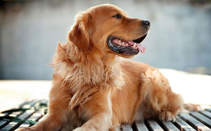 狗狗起名字有寓意有深度